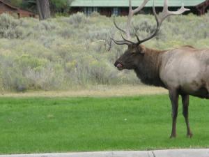 9) Elk2